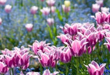 Beautiful Bulbs! / Now is a great time to think about planting your Spring flowering bulbs. Plant in the Autumn for a beautiful Spring display. We've collected some of our very favourite bulb pics to cheer us all up as the nights draw in and the new season chill arrives.