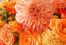 color wedding orange