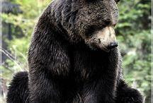 bear crazy