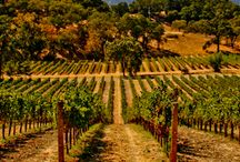 Wine Country / All about Wine! / by Jane Hughes