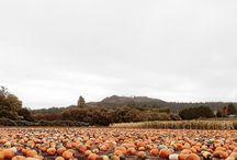 Seasons: All Things Autumn