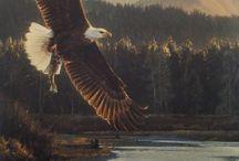 eagle stuff