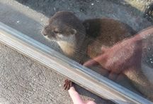 Otters!!!! / Sometimes You Need Otters In Your Life!