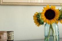 Flowers, one of my hobbies / by Jodi Armendariz