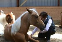 HorseFriendShip