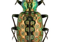 Color combinations on bugs
