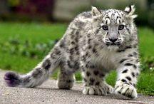 Animal's beauty