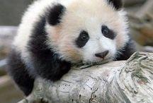 Pandas world ^.^