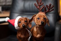 Christmas / by Lyric Murphy