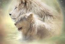leeuw <3