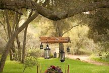 garden dreams..