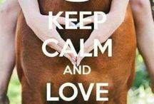 Keep Calm pferde sprüxhe