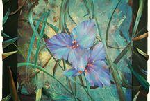 les fleurs ou les sexes des plantes / Fleurs décoratives