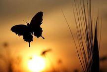 The tree en die vlinder