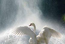 Aves Kingdom