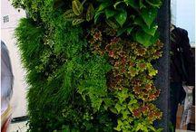grønn glede