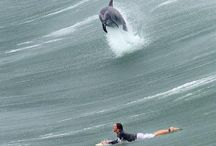 surf n style