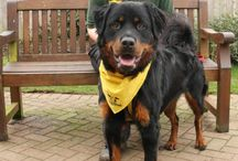 Loughborough / Please feel free to visit us during our opening times and see our wonderful dogs who are looking for homes and chat to our friendly team. Our reception team will offer you a warm welcome and guide you through our rehoming process and invite you to view the dogs in our rehoming area. Our knowledgeable Canine Carers are on hand to advise you on which dogs are a suitable match to your family and home before providing information on the personality, health and behaviour of your chosen dog.