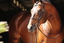 Horses / by Kristi Newlin