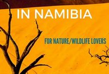 Namibia | Travel Planning Guide / Travel planning advice and travel tips for Namibia, including where to travel, which cities to visit, and the outdoor adventures that should be on your bucket list!