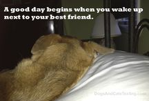 Word: Dogs and Cats / The world according to dogs and cats. Quotes and inspiration from a dog and cat point of view.