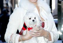 Love That Celebrity Pet