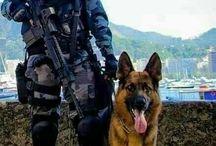 warrior dog