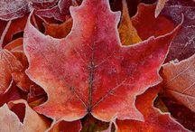 Autumn / by Maria