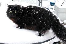 Black Cat / Frey