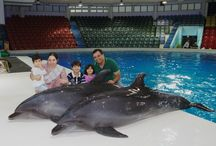 Captured Moments at Dubai Dolphinarium / The one and only dolphin show in Dubai that caters laughter and excitement to everyone.