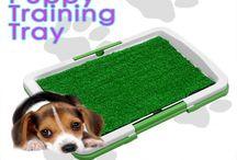 Pet Accessories Daily Deals