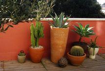 Dans la vie il y a des cactus