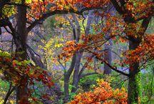 Naturen, skøn som den er