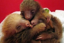 Beautiful Sloths / by Terri Richards