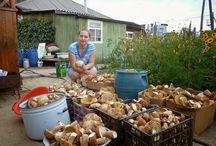 Выращивает грибы