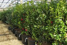 One week in March 2016 / Just one week at Provender Nurseries - busy time of year and loads coming in.