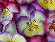 INSPO: FLOWERS