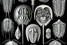 BEADWORK - Fossil
