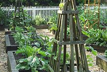 Backyard Spaces/Gardening