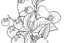 과일,야채