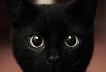 Critter-tacular! / Happy animals, creative animal shots, all sorts of critter happiness. / by Jennifer Kellogg