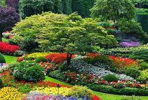 Puutarha - Garden / Puutarha, garden