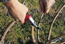 Planting cultivating preparation of plants