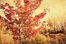 Fall / by Abigail Killen