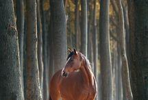 horses - fall