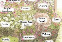 Perhoset ja muut Pörriäiset