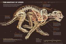 Hayvan Anatomisi