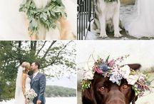 Dogs, Weddings & Celebrations