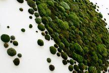 Moss art / Moss art
