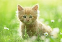 Little Cat In Green Ground Photo Download   Famous HD Wallpaper